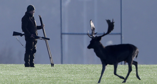 Phoenix Park deer cull
