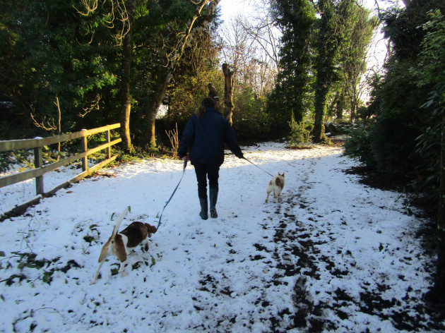 ISPCA Winter Pet Care Tips and Advice
