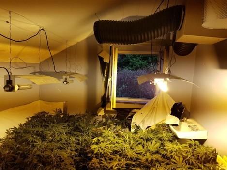 cannabis donegal 2