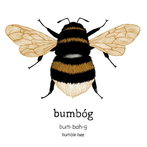 bumbog_bumblebee