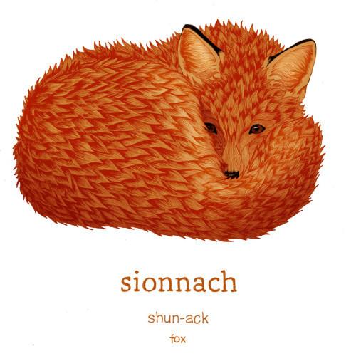sionnach_fox