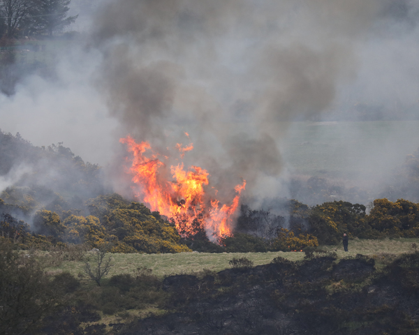 WICKLOW FIRES II2A9741_90565338