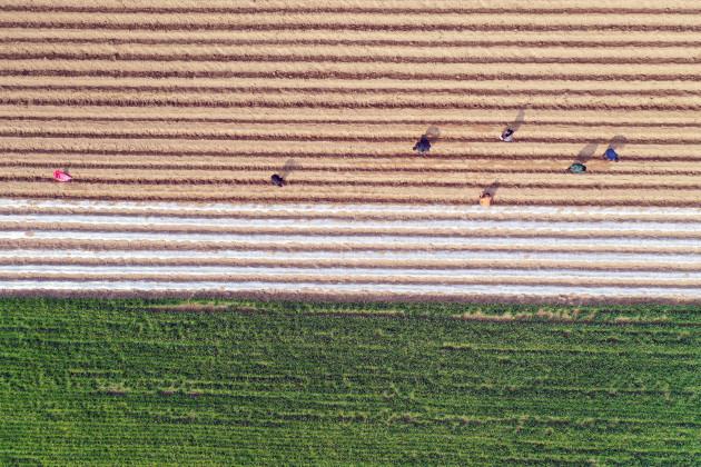 #CHINA-JINGZHE-FARM WORK