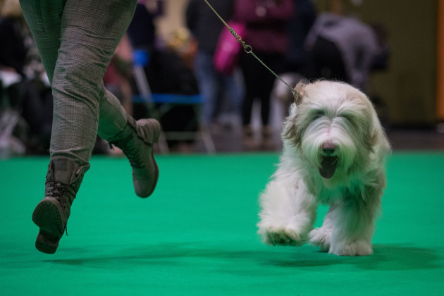 Crufts Dog Show - Day Two