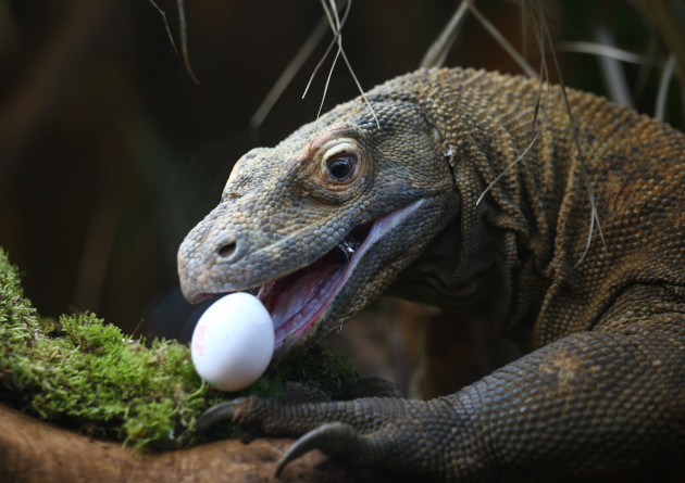 Easter at ZSL London Zoo
