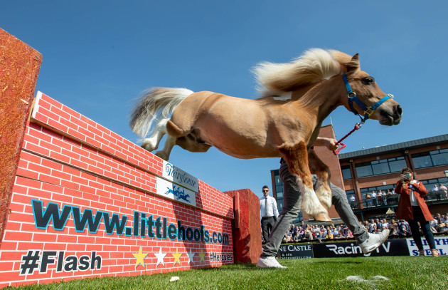 Flash clears a wall during a display of Fallabella ponies