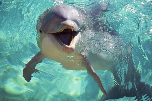 fc3473c5c23dd3 Military Porpoises: Why dolphins, whales and sea lions have been trained by  foreign military since the 1950s