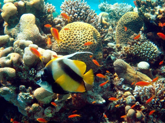 Impressions of the Red Sea - Coral reef