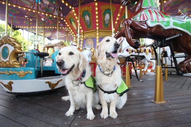 Irish Guide Dogs Tayto Park