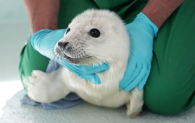 macca-the-seal