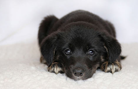 ispca-rescue-three-vulnerable-puppies-that-were-abandoned-in-a-g