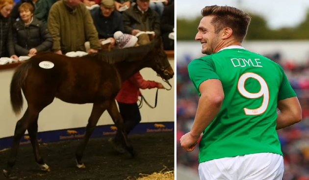 Kevin Doyle horse 1