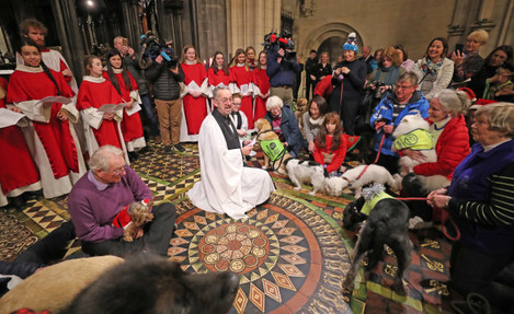 peata-therapy-dog-carol-service