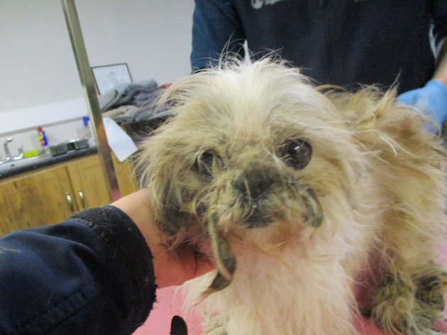 ispca-remove-eight-dogs-from-terrible-living-conditions
