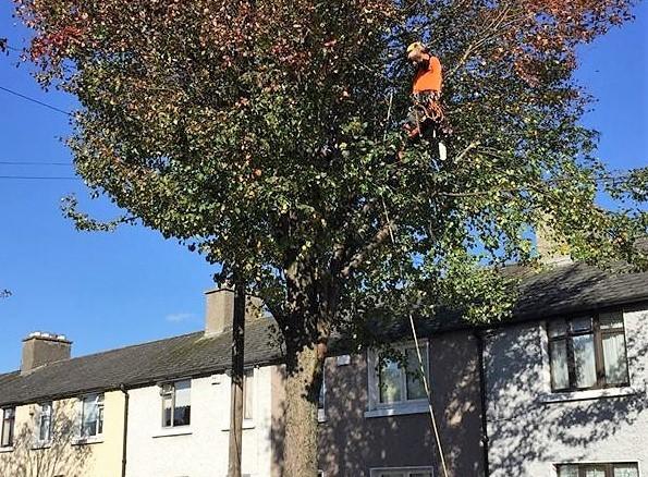 Tree Felling 2