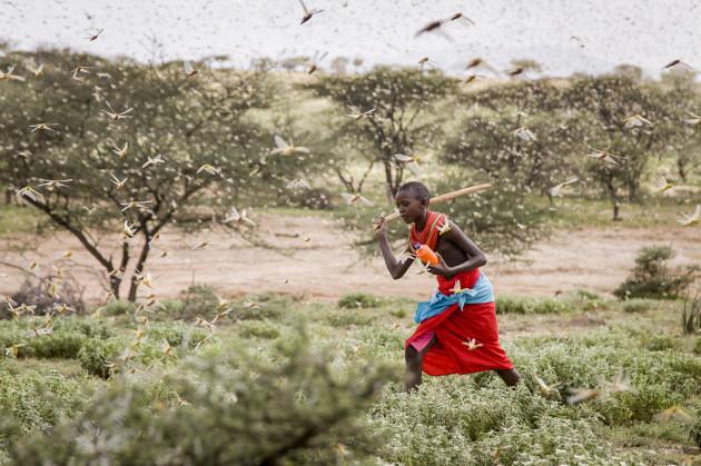 africa-locust-outbreak