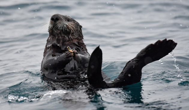 sea-otters-to-come-to-birmingham