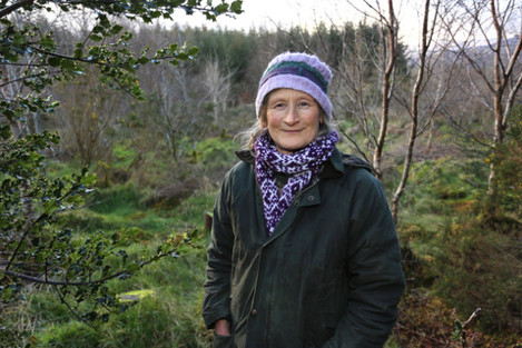 irish-state-owned-forestry-company-coillte-takes-grandmother-to-court-for-cutting-down-hundreds-of-spruce-trees