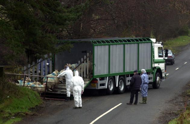 foot-and-mouth-crisis-disease-farming-animals-trucks