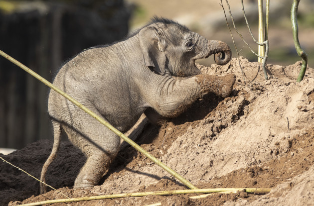 baby-elephant-at-chester-zoo