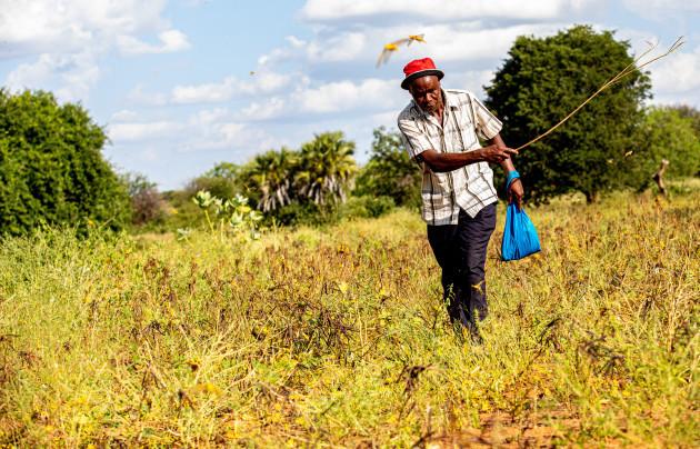 xinhua-headlines-locust-outbreak-threatens-food-security-in-east-africa-international-response-urged