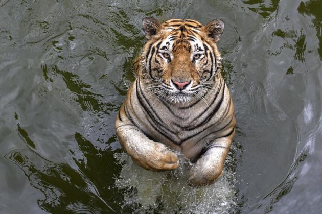 animals-in-zoo-in-dhaka-bangladesh-22-sep-2020