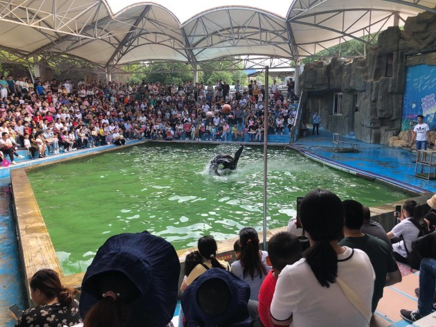 greg aquarium