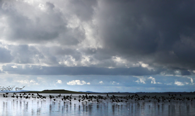 annual-count-of-canadian-brent-geese-at-strangford-lough