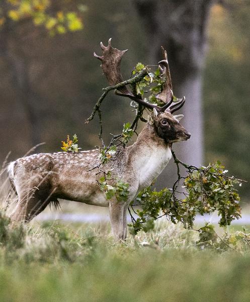 deer 82