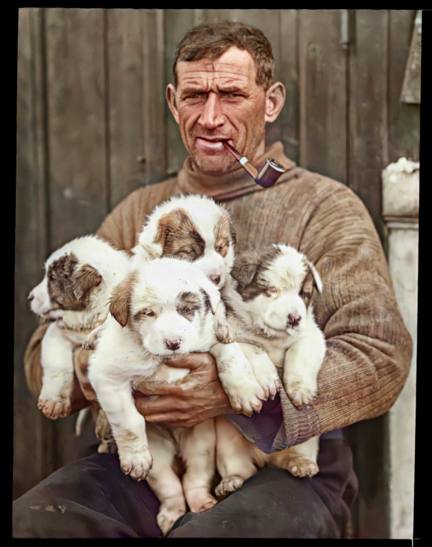 tom-crean-and-pups_49893138628_o
