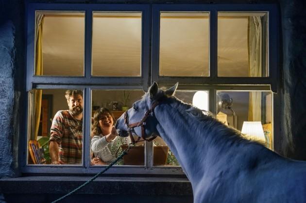Zai the Connemara pony