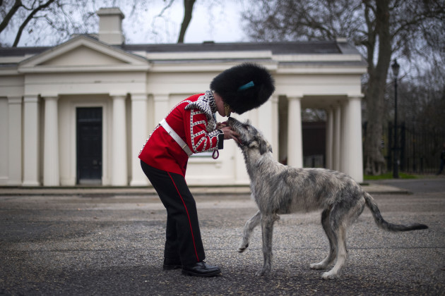 irish-guards-new-mascot