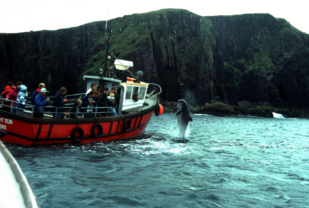 fungie-the-dolphin-in-the-dingle-peninsula-on-the-kerry-coast-of-ireland