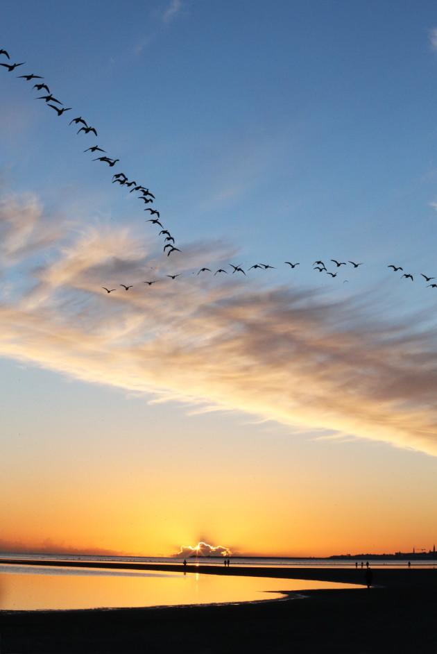 173 Sandymount Sunrise