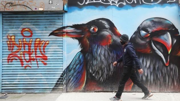 0266 Raven birds street art