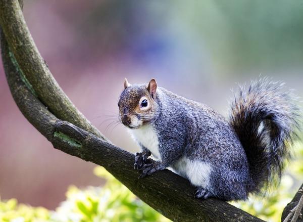 squirrel 042
