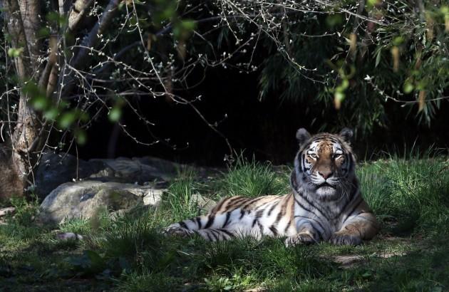 7438 Animals Zoo