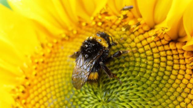 bee sanctuary1
