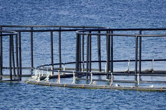Salmon pen on Lough Swilly, Co Donegal
