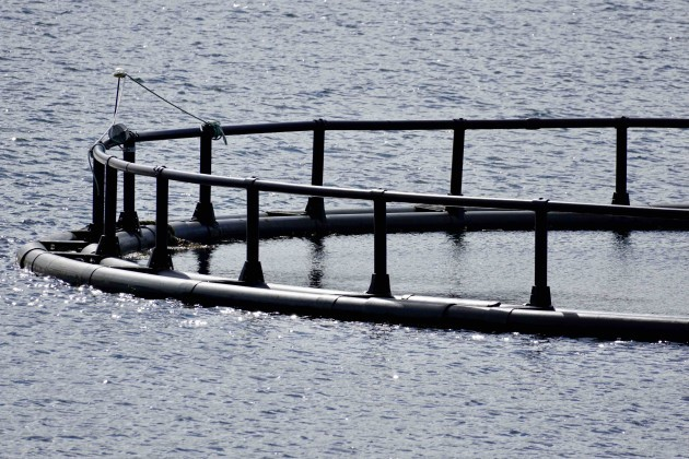 Close up of farmed salmon pen in Mulroy Bay, Co Donegal