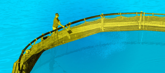 Troubled Waters project design featuring a man maintaining a salmon farm