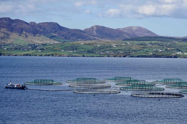 Lough Swilly - Large Salmon Farm (9)