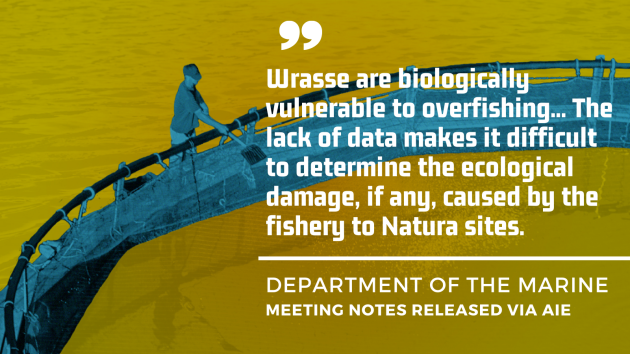 Department of the Marine - Meeting notes released via AIE - Wrasse are biologically vulnerable to overfishing... The lack of data makes it difficult to determine the ecological damage, if any, caused by the fishery to Natura sites.