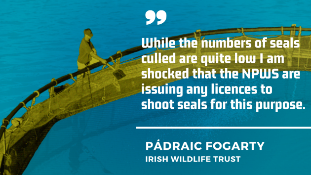 Pádraic Fogarty of the Irish Wildlife Trust - Although the number of seals killed is quite low, I am shocked that the NPWS is issuing licenses to kill seals for this purpose.