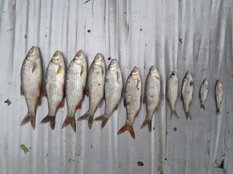 fish-2