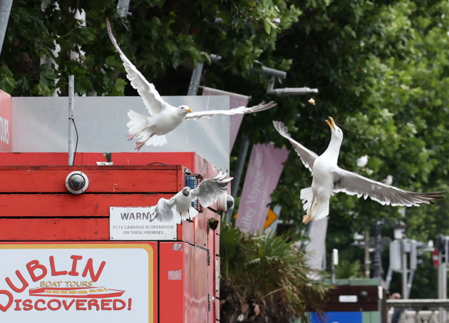 seagulls 957-2