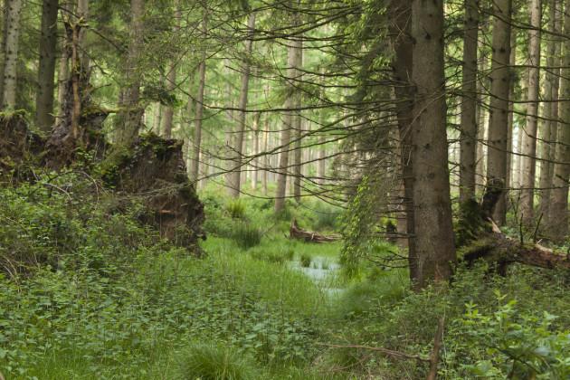 Russelstown wood beside the Poulaphouca Reservoir SPA in Co Wicklow