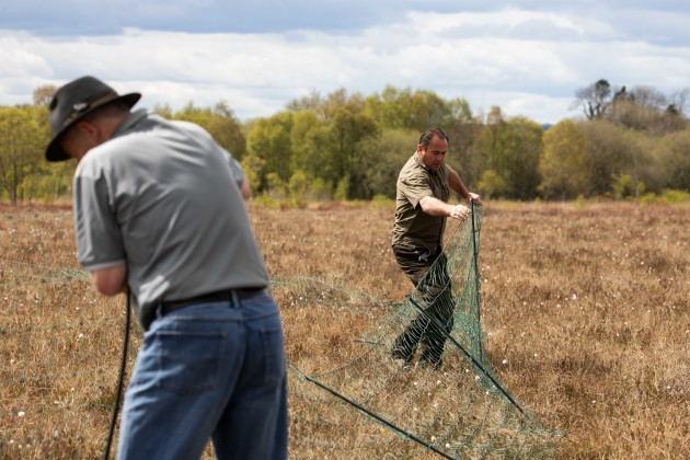 Curlew conservation programme team putting up fencing to protect curlew nest from predators