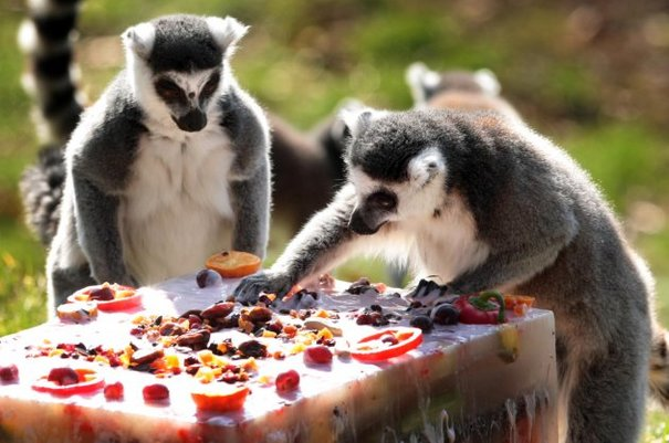 18 Photos Of Animals With Delicious Cakes 183 The Daily Edge