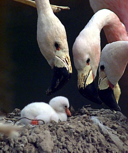 It S Friday So Here S A Slideshow Of Flamingos From Around